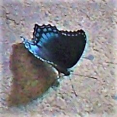 5985c10004470_monarchbutterfly.jpg.14bc602aa1a3d1d064e84e1c9c2cf558.jpg